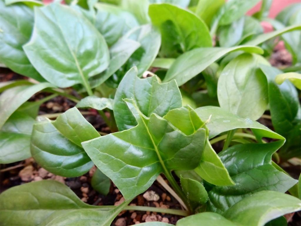 f:id:Mt_vegetable:20200113203403j:image