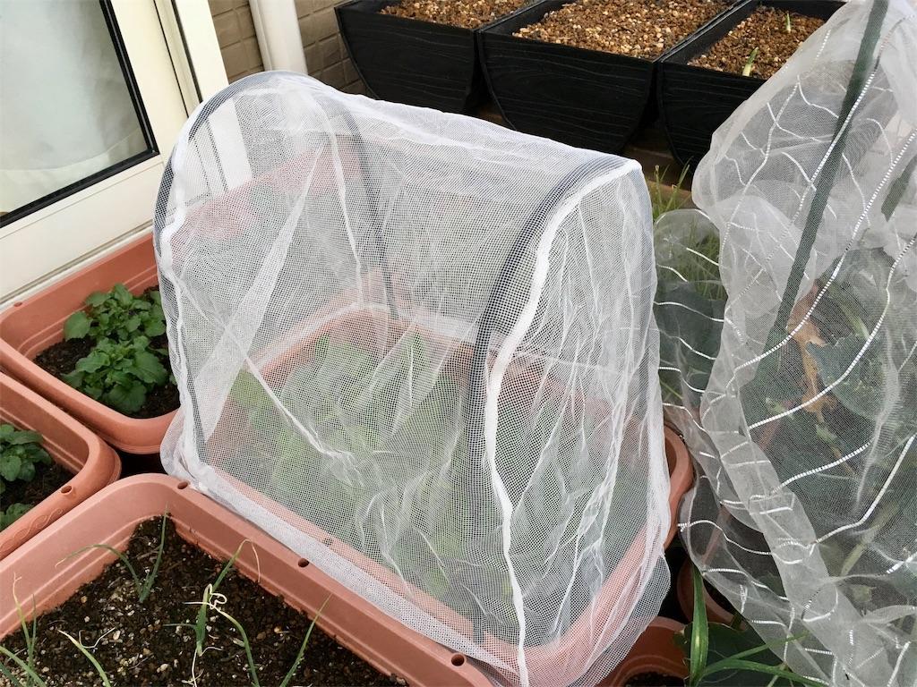 f:id:Mt_vegetable:20200113203412j:image