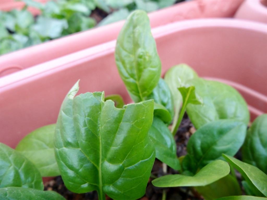 f:id:Mt_vegetable:20200113203420j:image