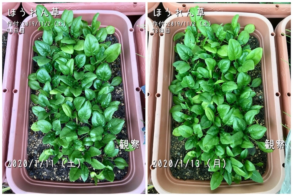 f:id:Mt_vegetable:20200113231749j:image