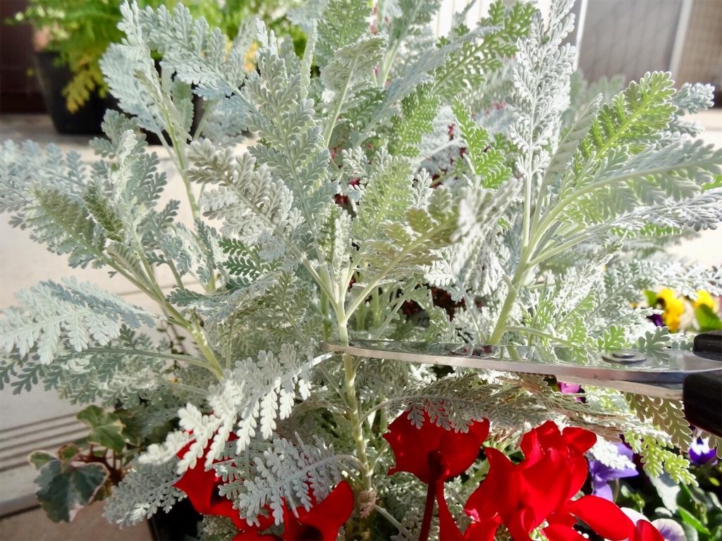 f:id:Mt_vegetable:20200114202219j:image
