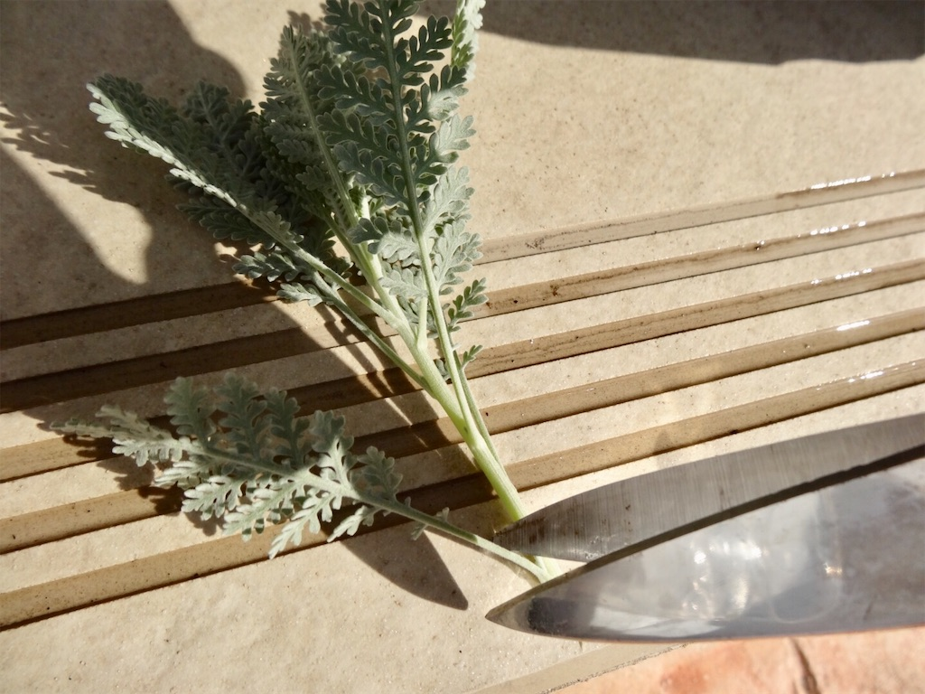 f:id:Mt_vegetable:20200114202242j:image