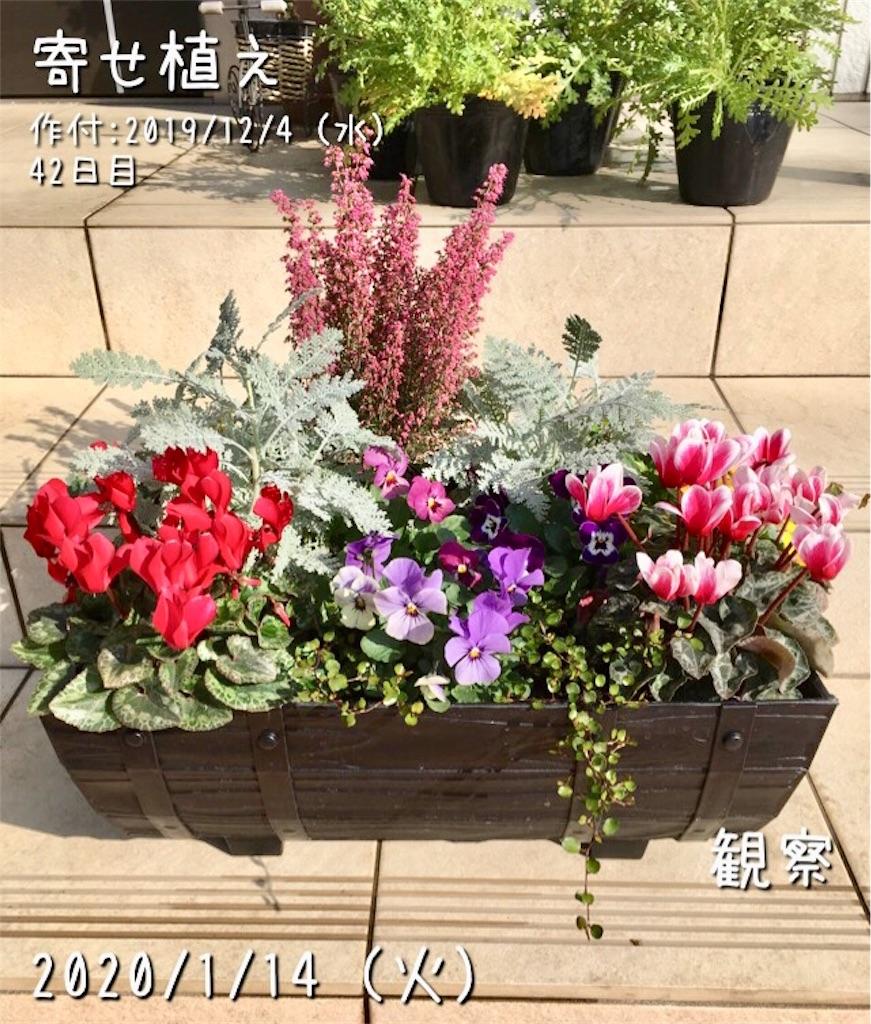 f:id:Mt_vegetable:20200114202345j:image
