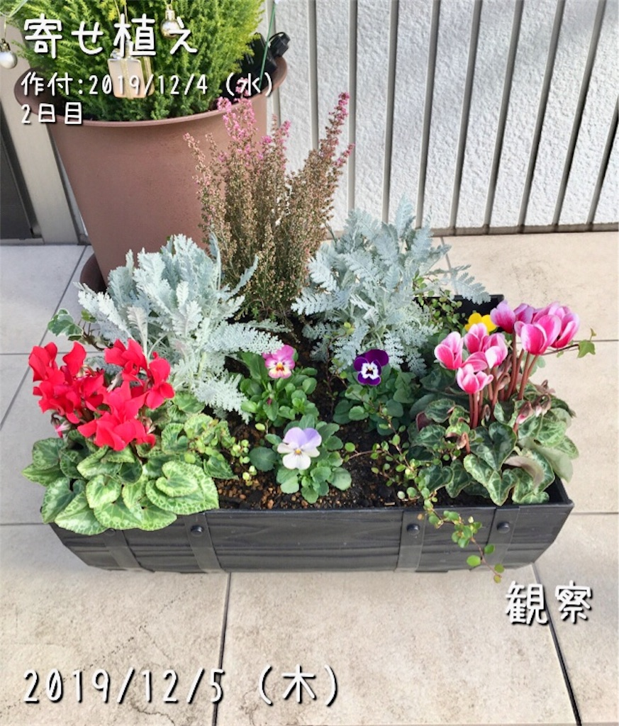 f:id:Mt_vegetable:20200114221357j:image