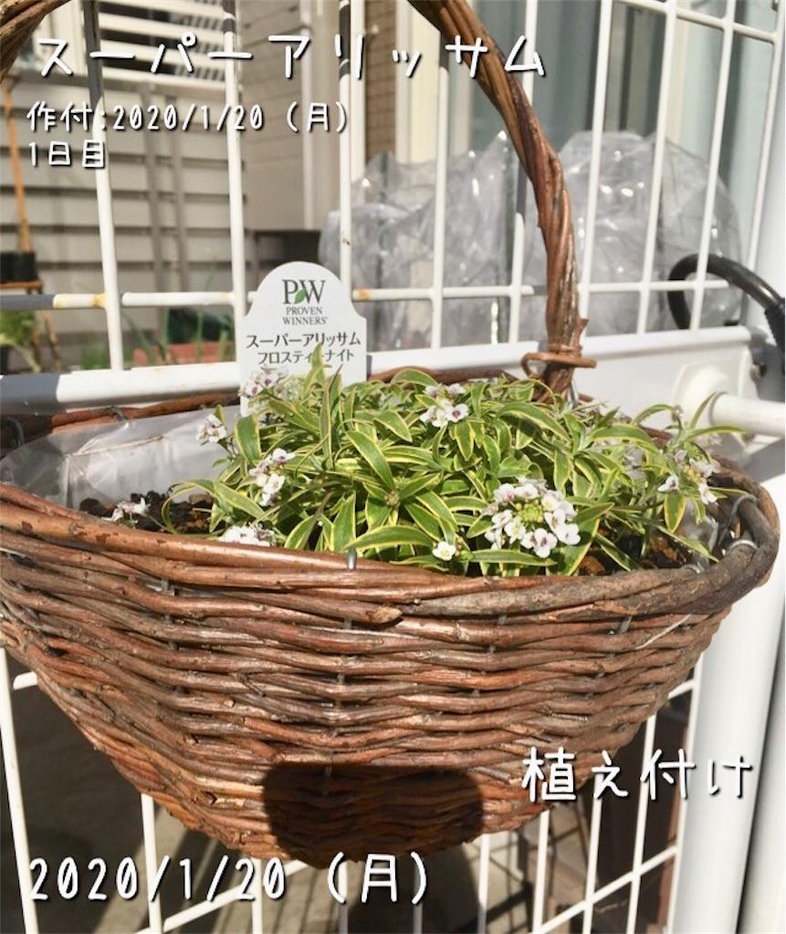 f:id:Mt_vegetable:20200120154643j:image