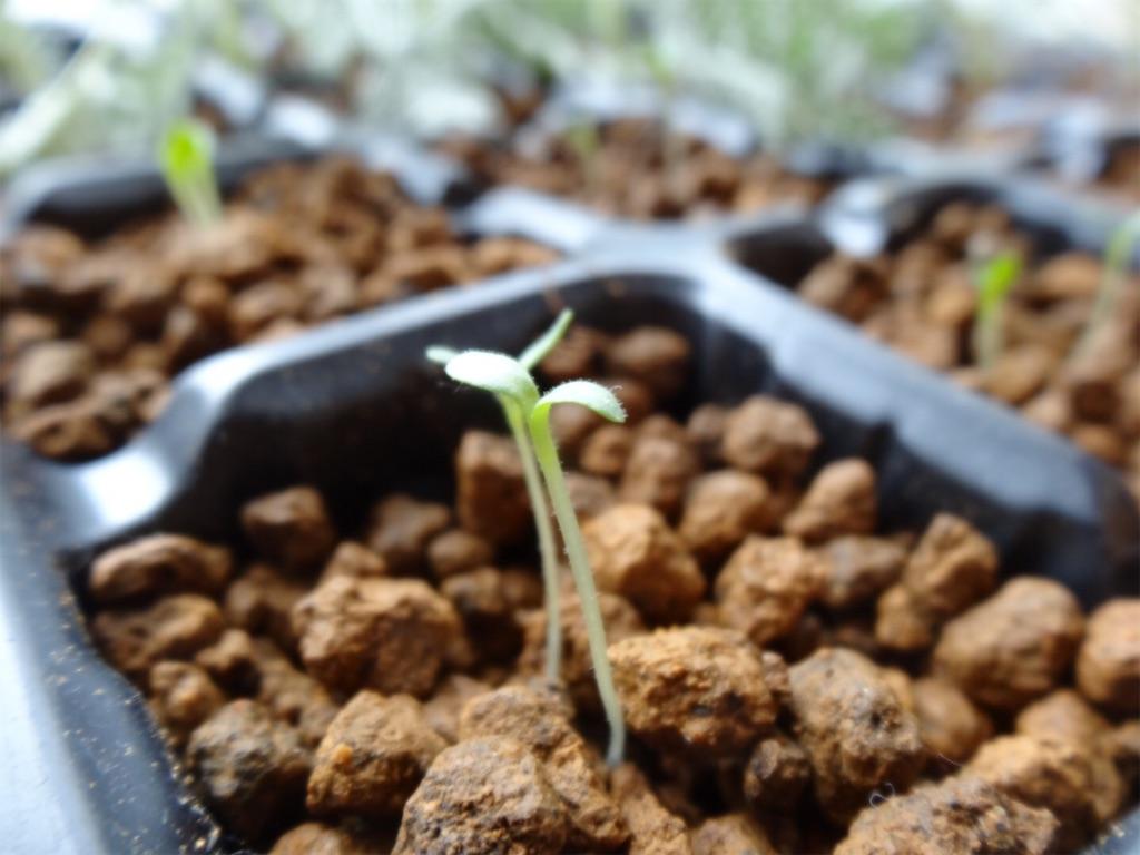 f:id:Mt_vegetable:20200130110734j:image