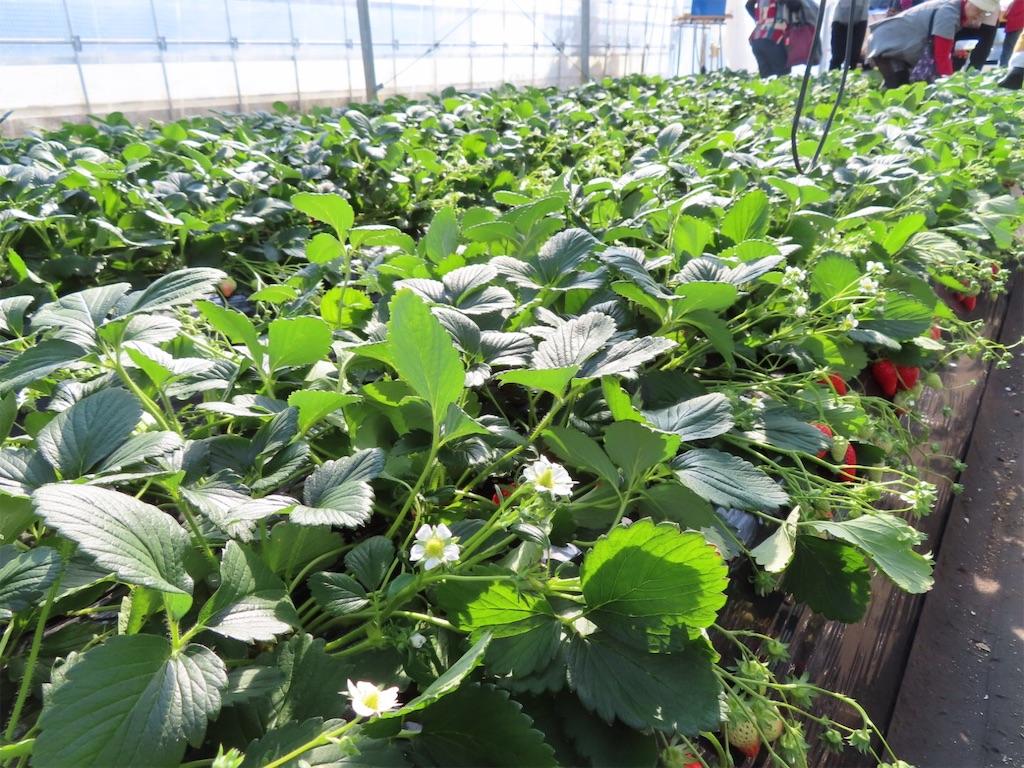 f:id:Mt_vegetable:20200213174454j:image