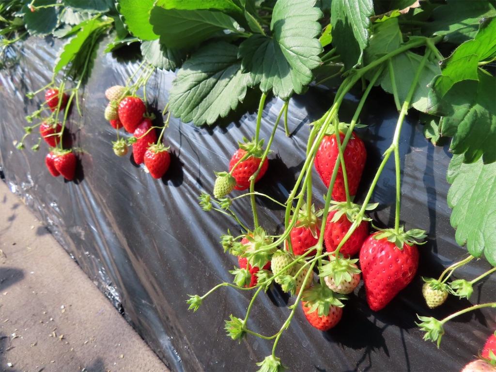 f:id:Mt_vegetable:20200213174503j:image