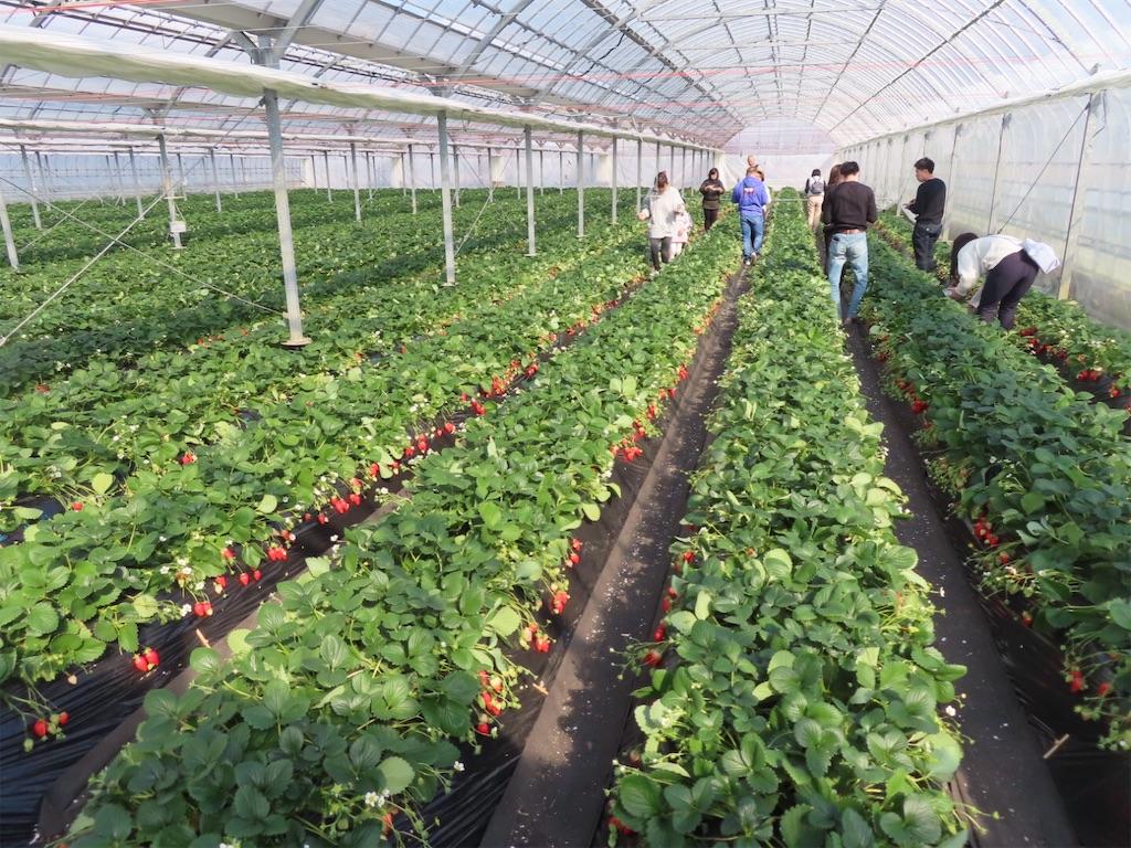 f:id:Mt_vegetable:20200213174518j:image