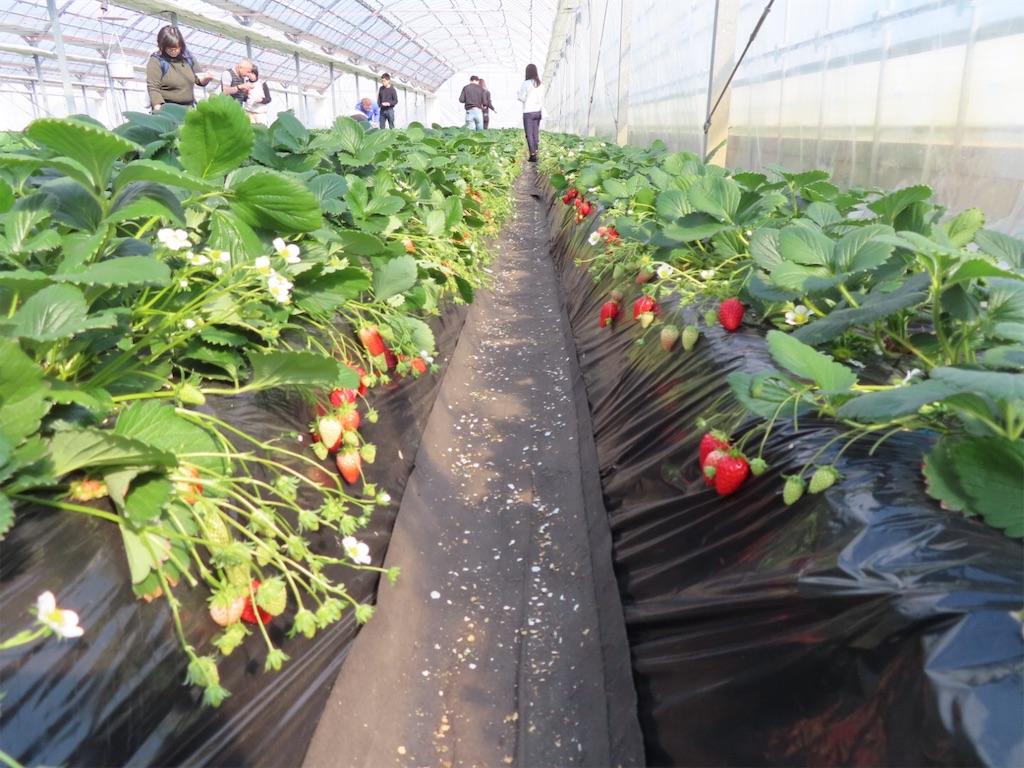 f:id:Mt_vegetable:20200213174527j:image