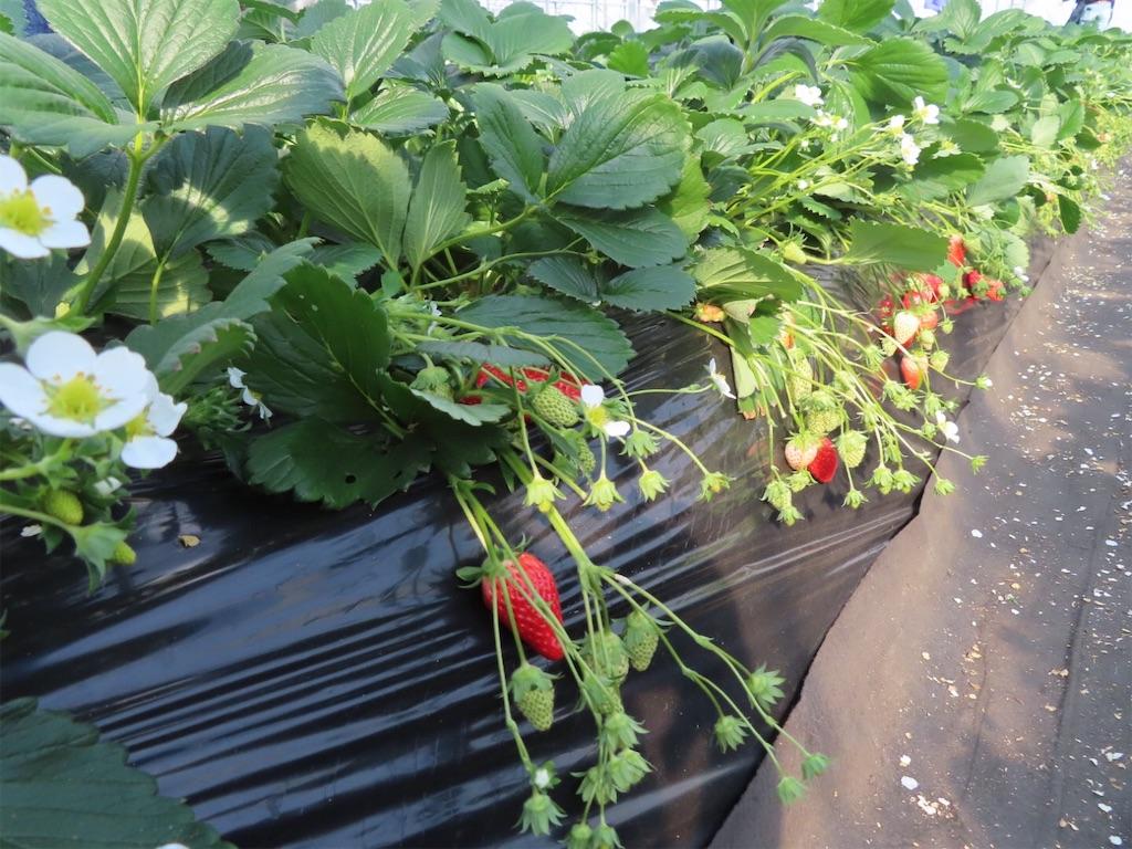 f:id:Mt_vegetable:20200213174552j:image