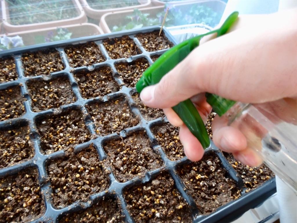 f:id:Mt_vegetable:20200215194352j:image