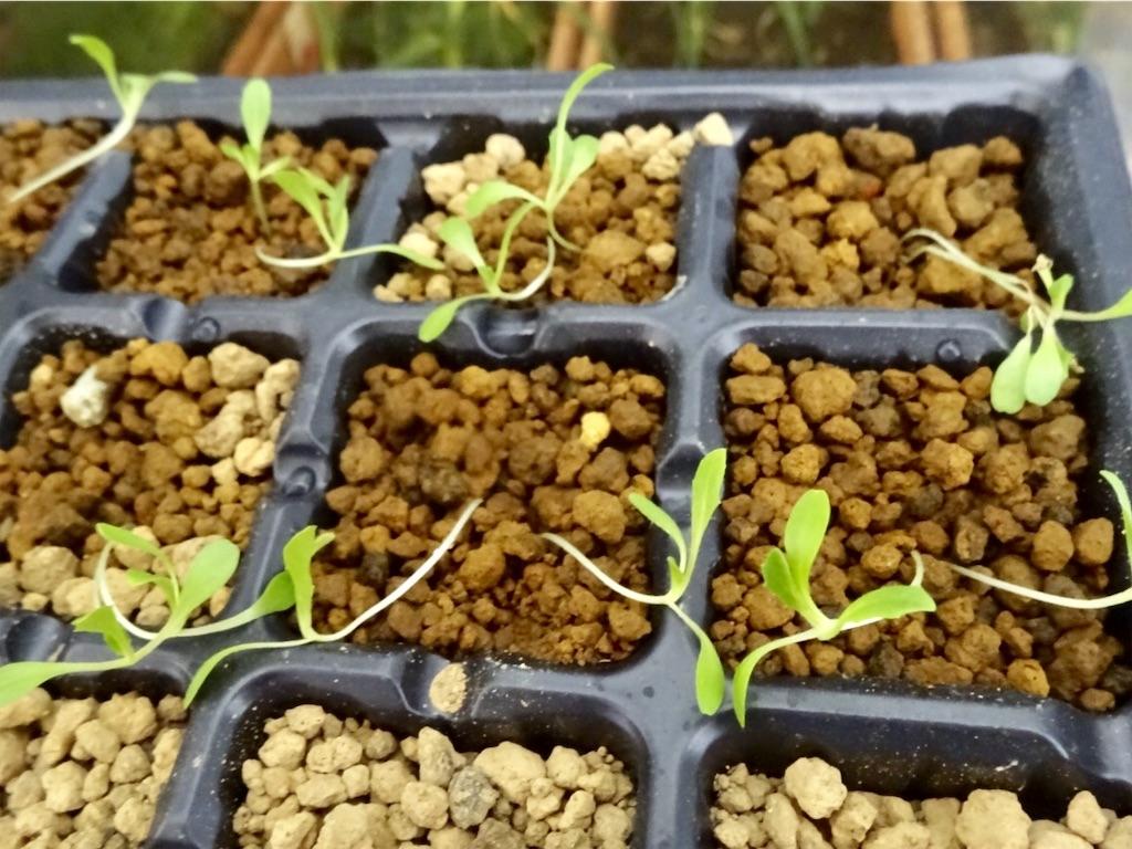 f:id:Mt_vegetable:20200215195100j:image