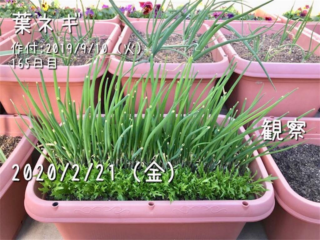 f:id:Mt_vegetable:20200223003605j:image
