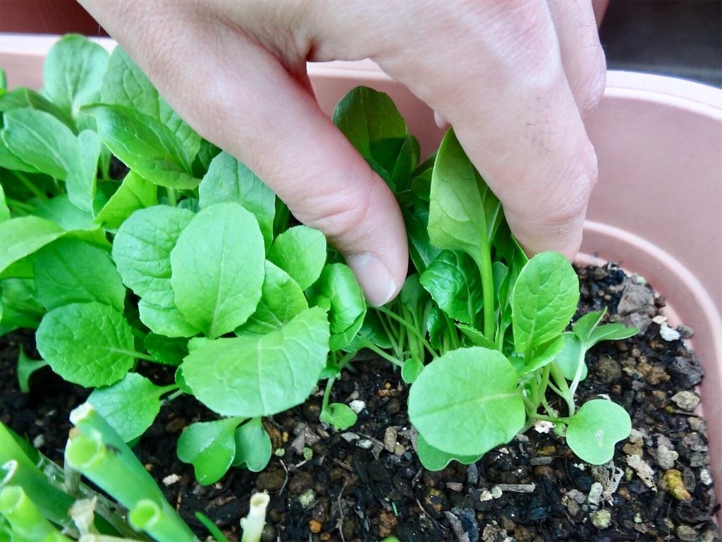 f:id:Mt_vegetable:20200223003611j:image