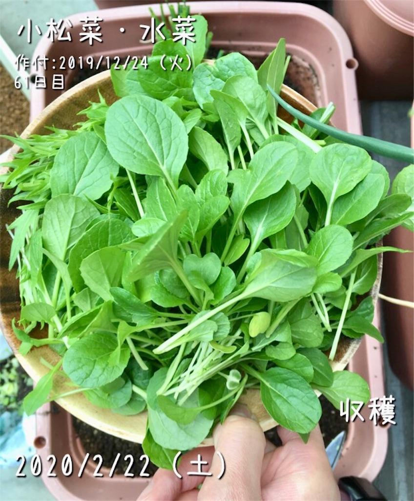 f:id:Mt_vegetable:20200223003623j:image