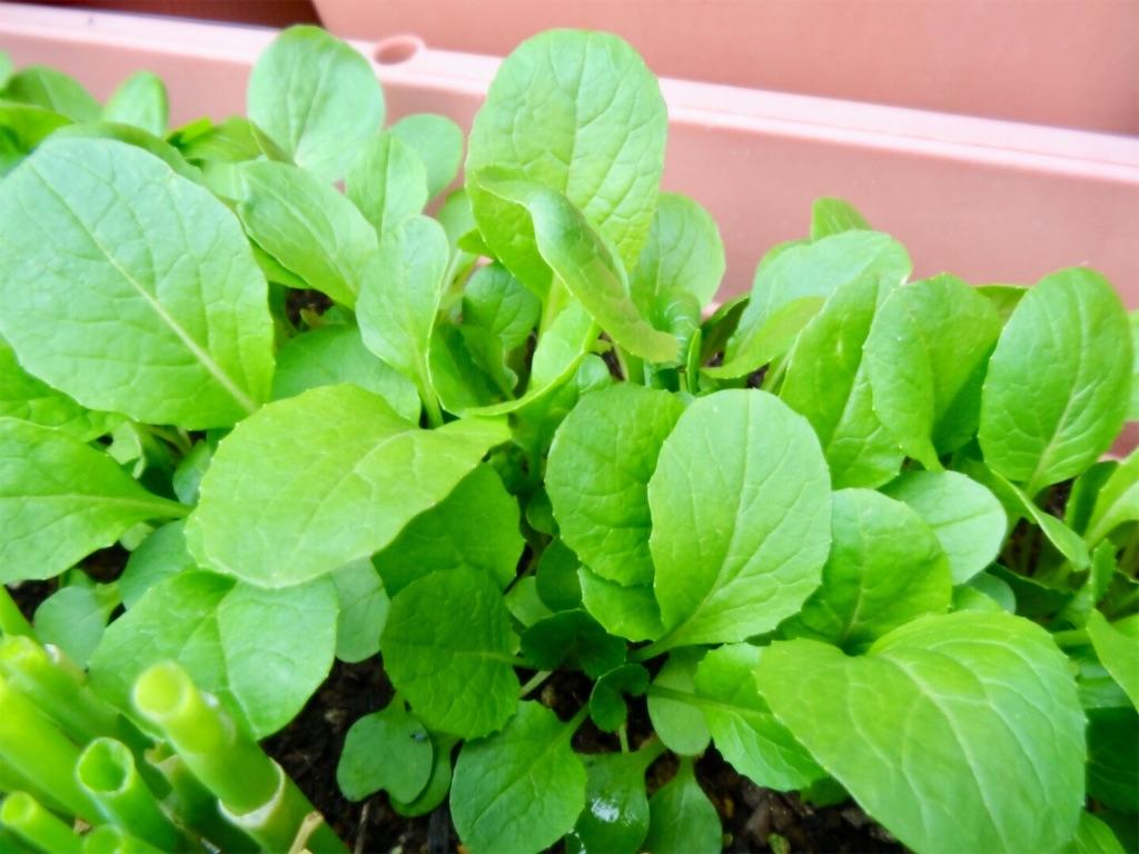 f:id:Mt_vegetable:20200223003627j:image