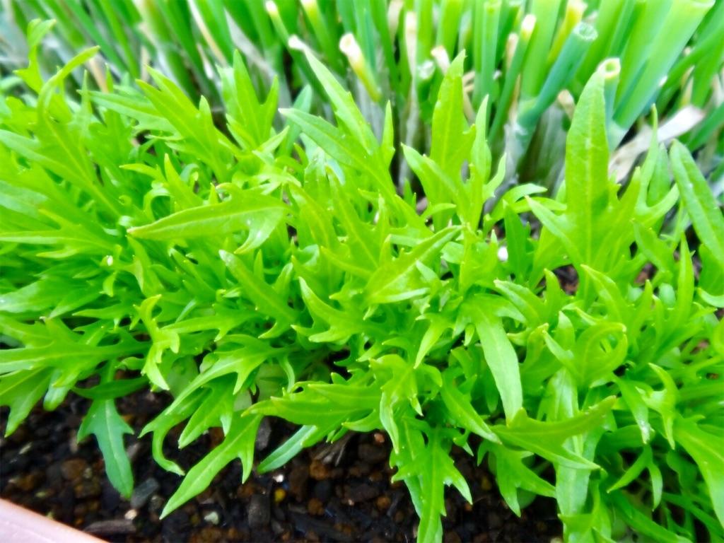 f:id:Mt_vegetable:20200223003636j:image
