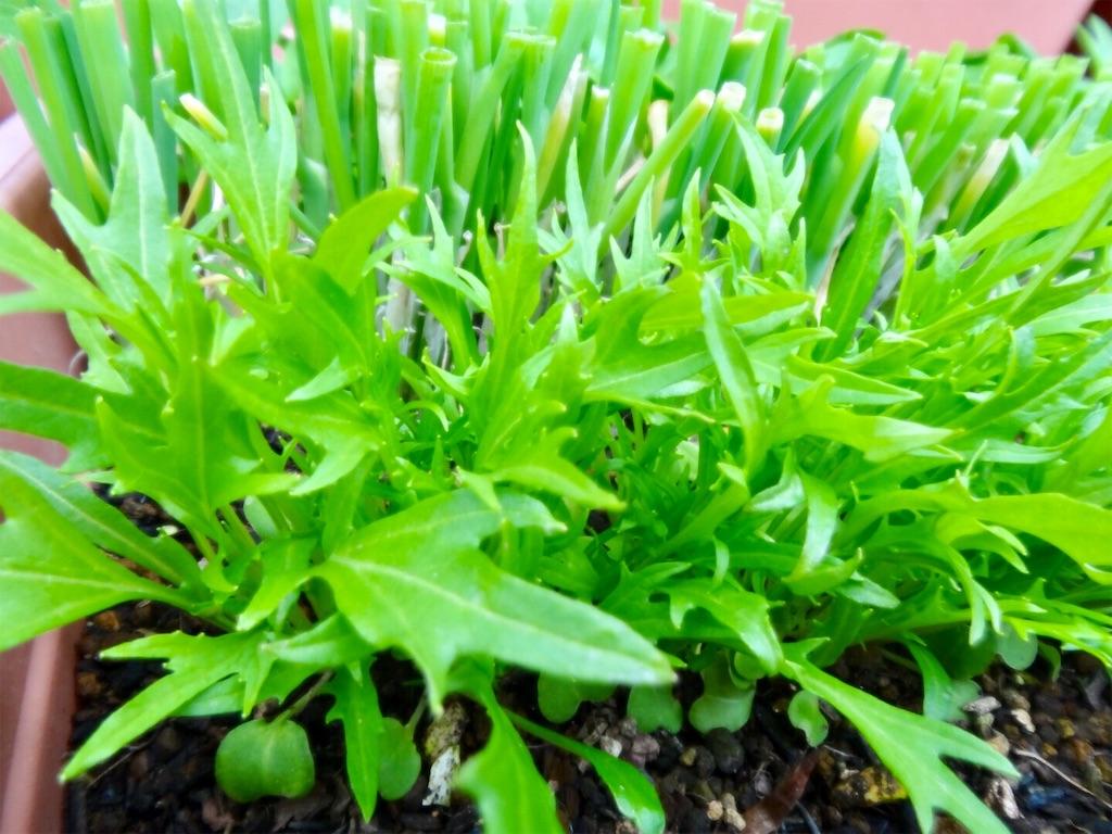 f:id:Mt_vegetable:20200223003702j:image