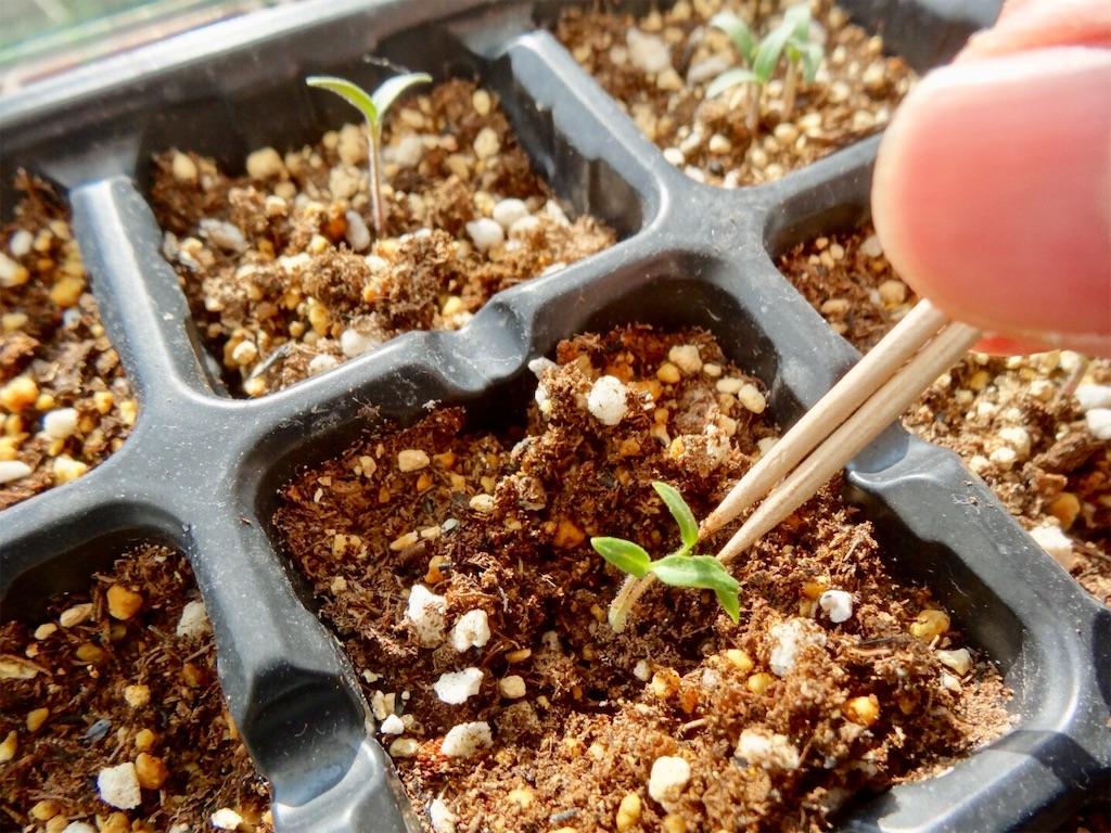 f:id:Mt_vegetable:20200224194209j:image