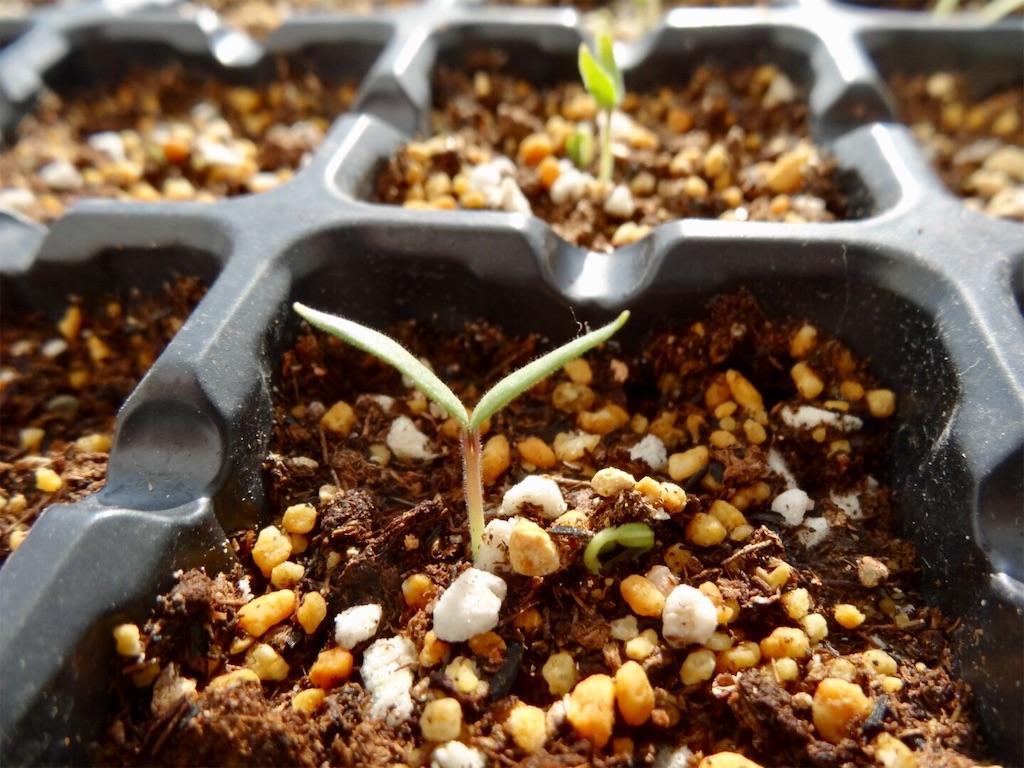 f:id:Mt_vegetable:20200224194219j:image