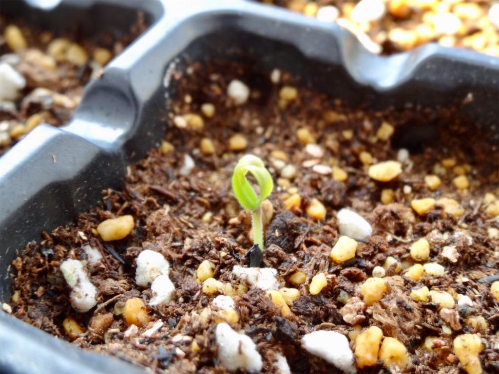 f:id:Mt_vegetable:20200224194224j:image