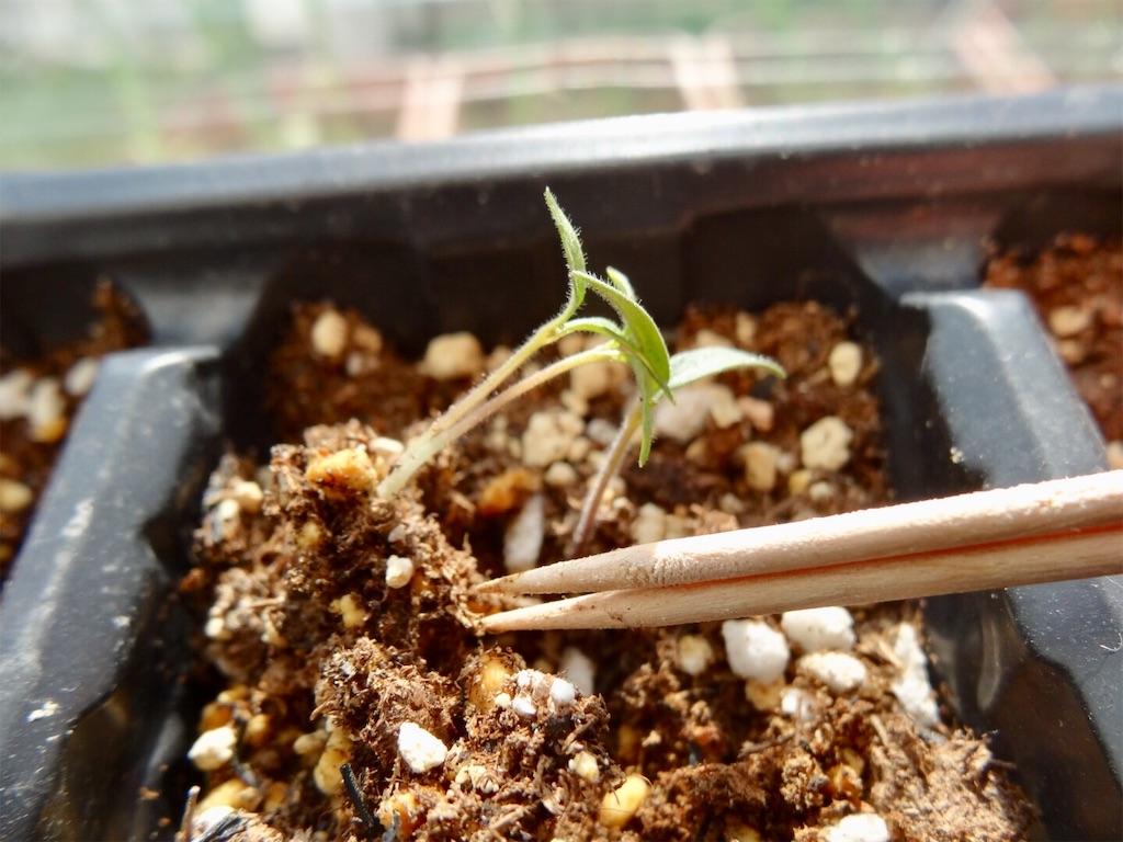f:id:Mt_vegetable:20200224194300j:image
