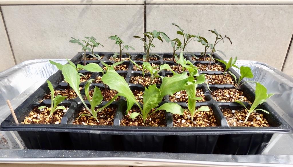 f:id:Mt_vegetable:20200313192148j:image