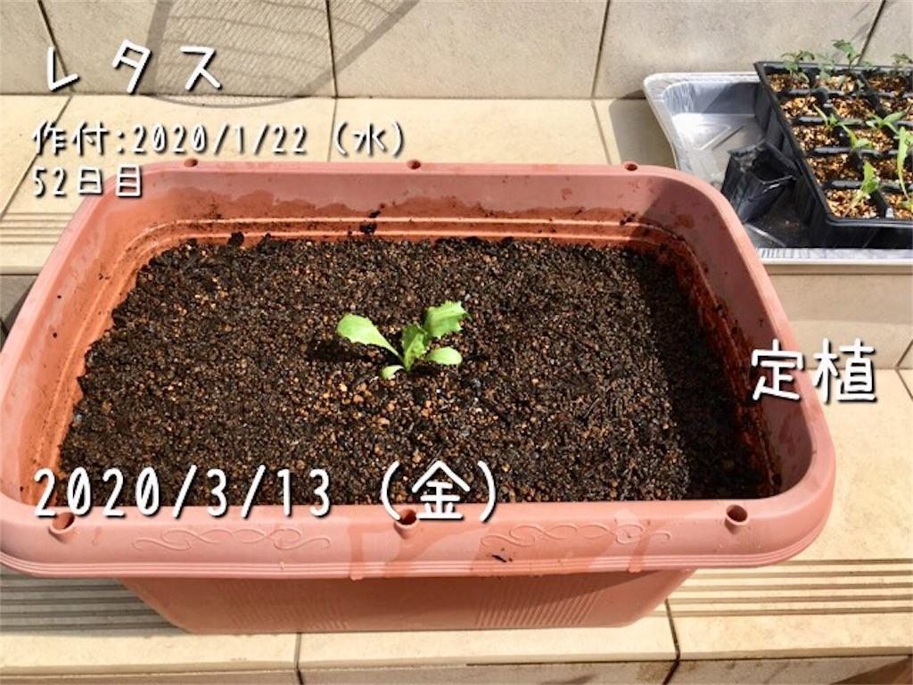 f:id:Mt_vegetable:20200313192512j:image