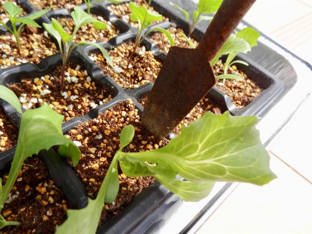 f:id:Mt_vegetable:20200313192614j:image