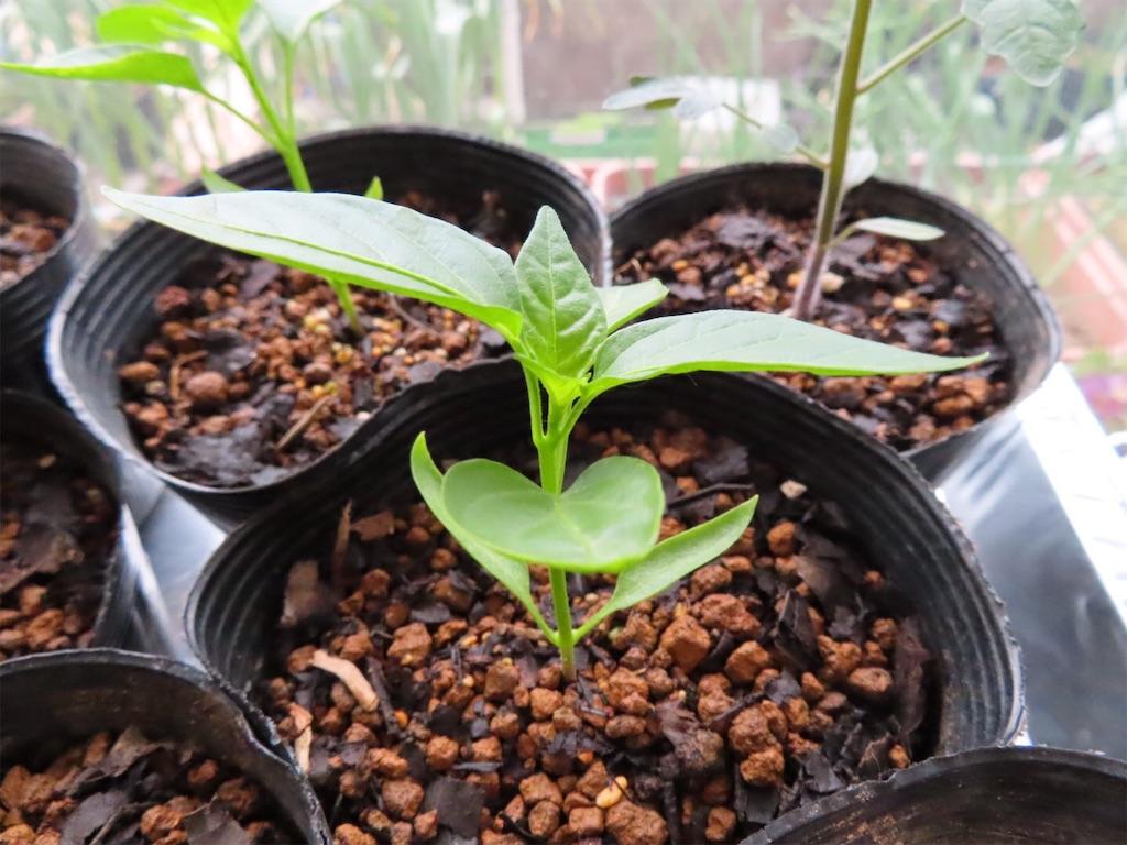f:id:Mt_vegetable:20200327172436j:image
