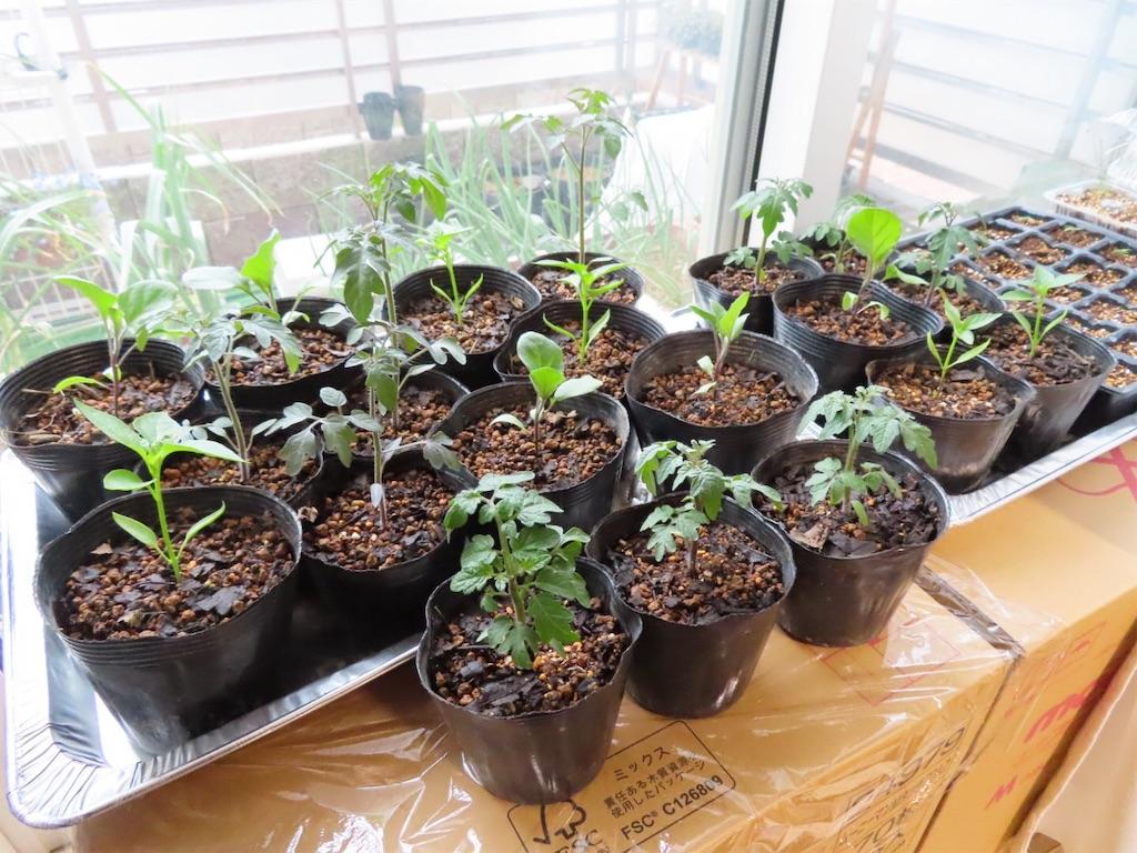 f:id:Mt_vegetable:20200327172543j:image