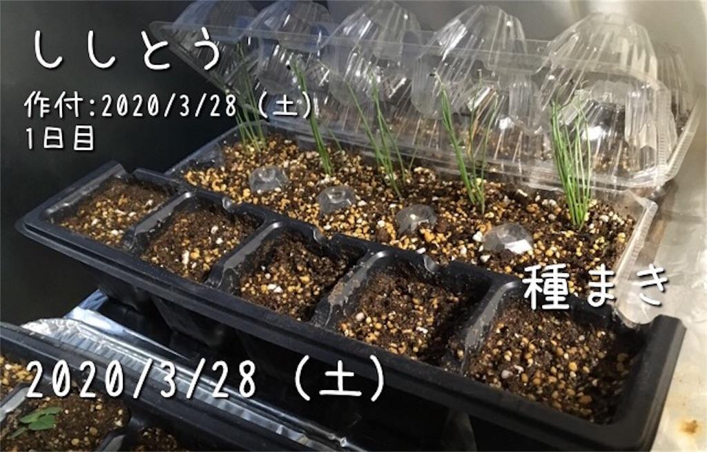 f:id:Mt_vegetable:20200328212822j:image