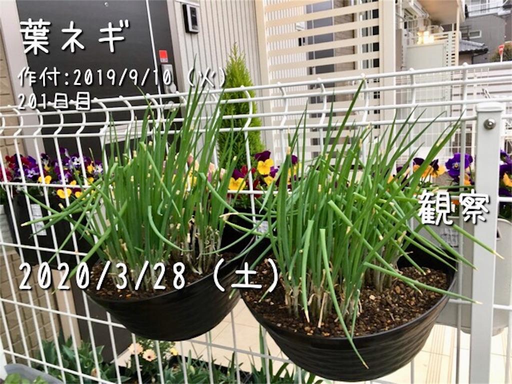 f:id:Mt_vegetable:20200328213552j:image