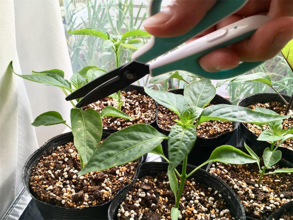 f:id:Mt_vegetable:20200407180109j:image