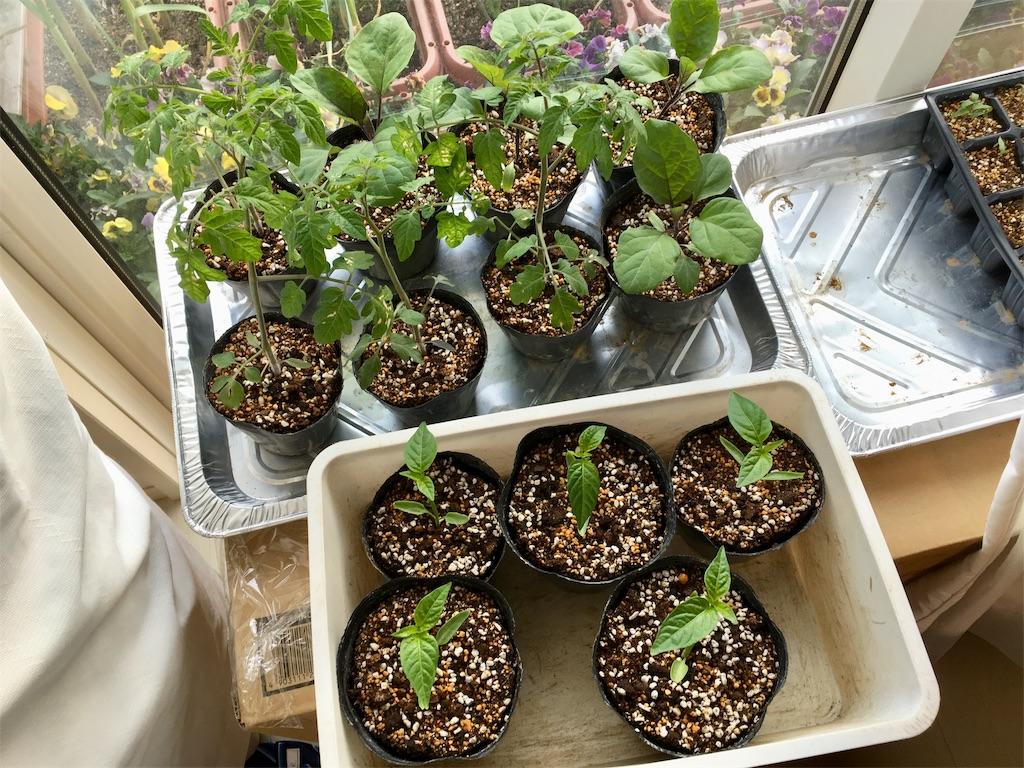 f:id:Mt_vegetable:20200407180116j:image
