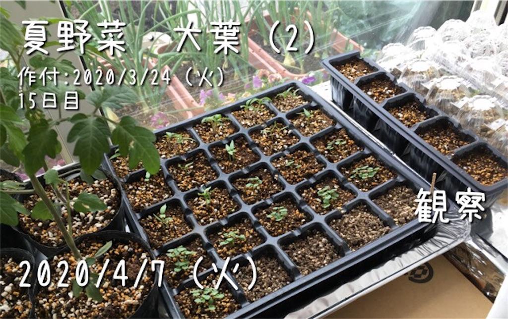 f:id:Mt_vegetable:20200407180343j:image