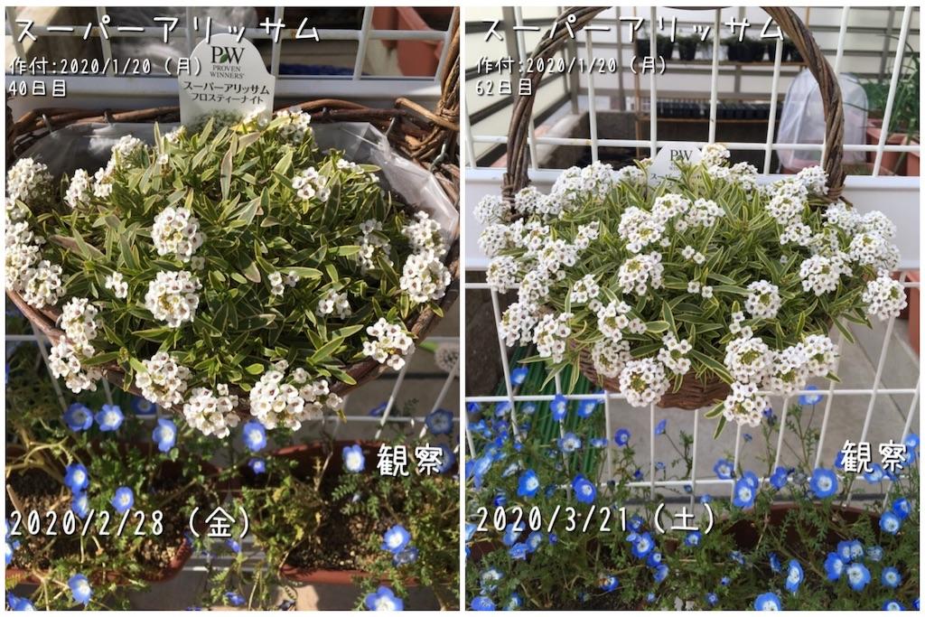 f:id:Mt_vegetable:20200514233732j:image