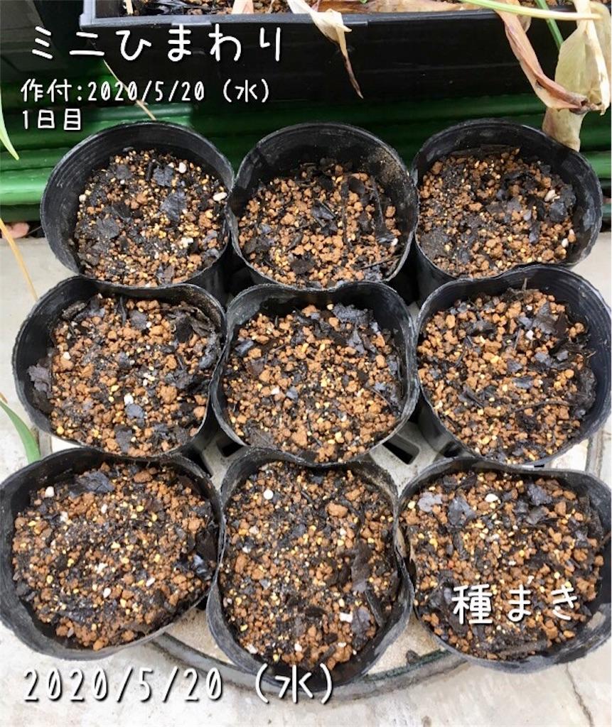 f:id:Mt_vegetable:20200520172931j:image