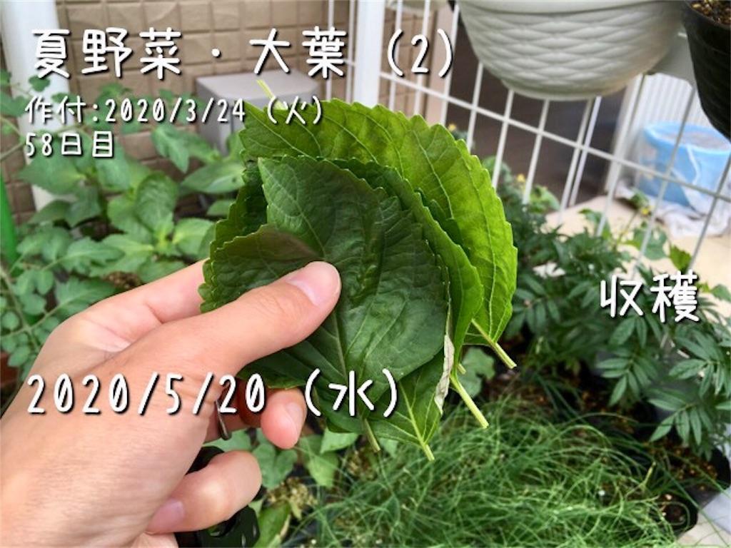f:id:Mt_vegetable:20200520173102j:image
