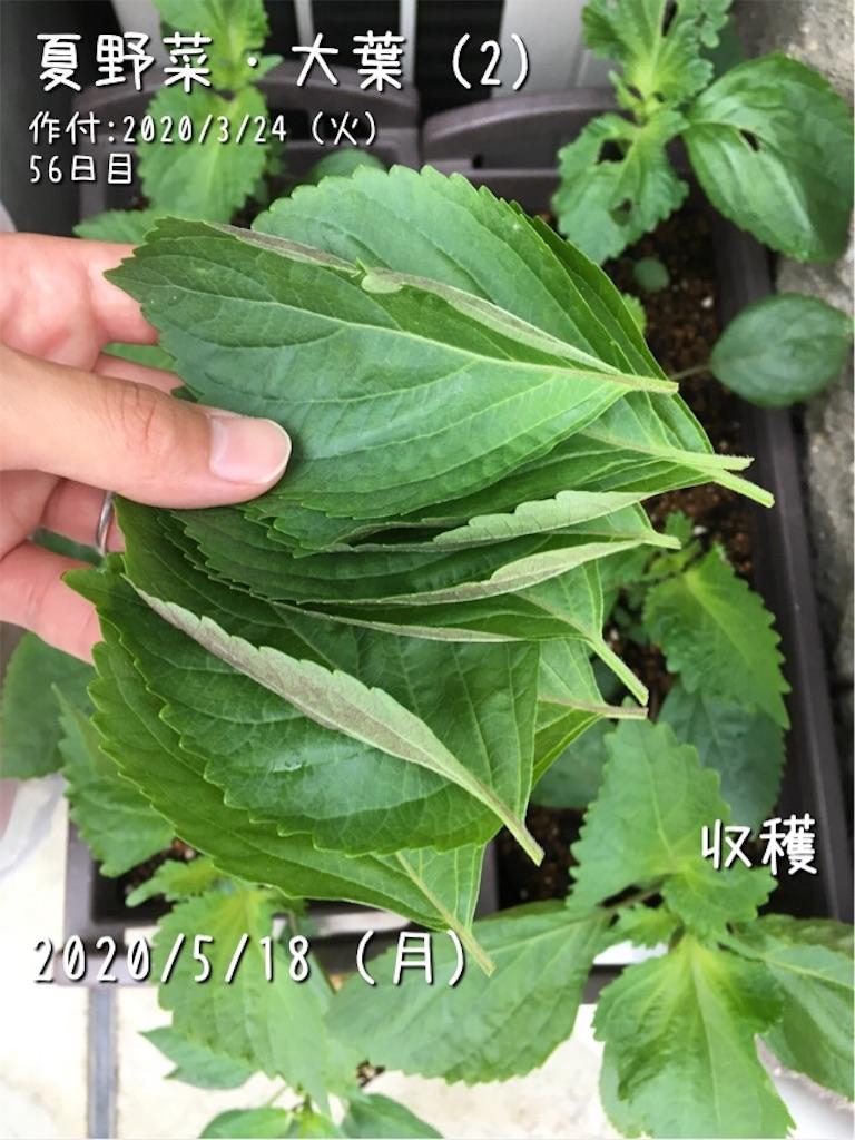 f:id:Mt_vegetable:20200520173109j:image