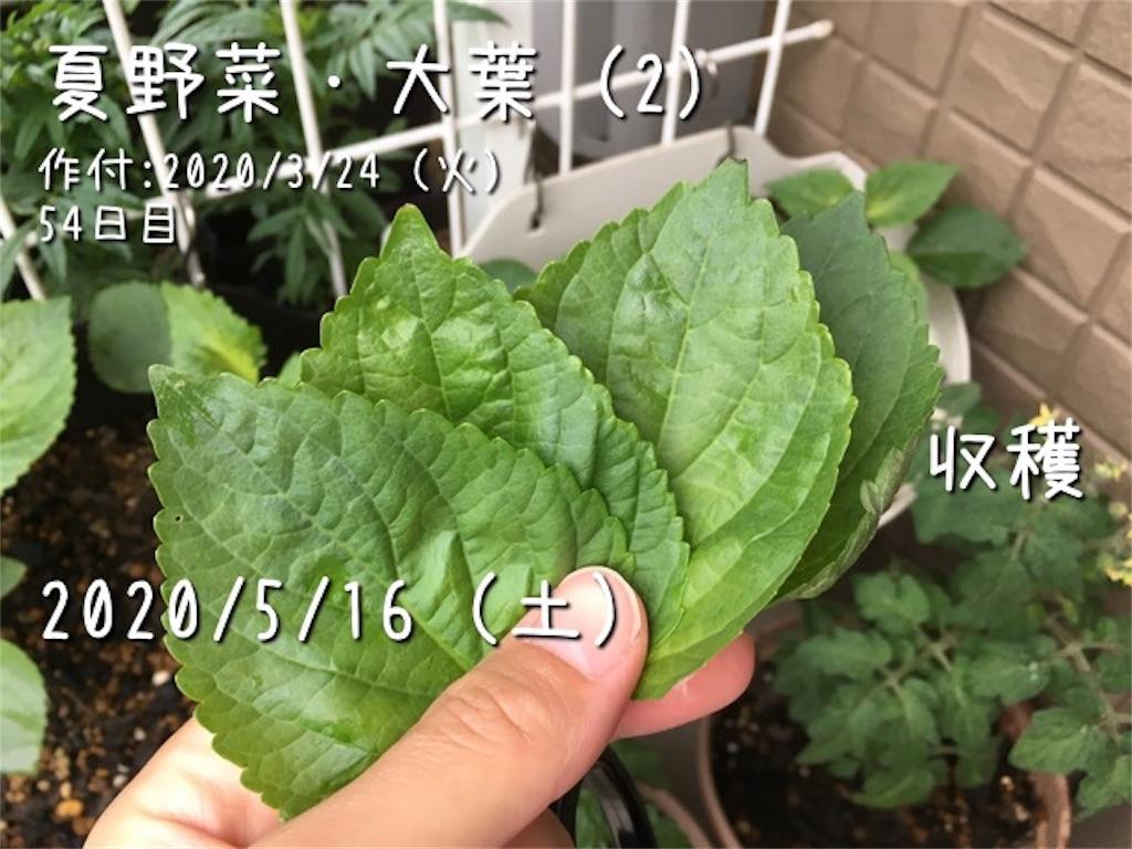 f:id:Mt_vegetable:20200520173112j:image