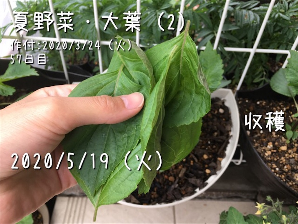f:id:Mt_vegetable:20200520173116j:image