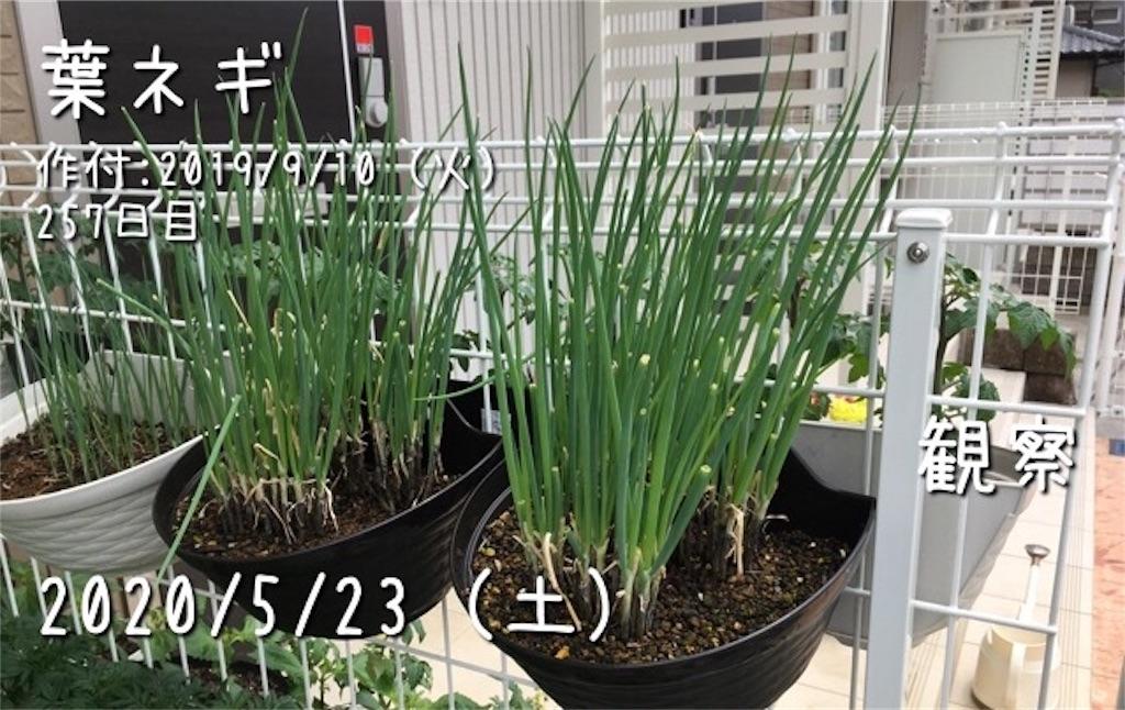 f:id:Mt_vegetable:20200523230059j:image