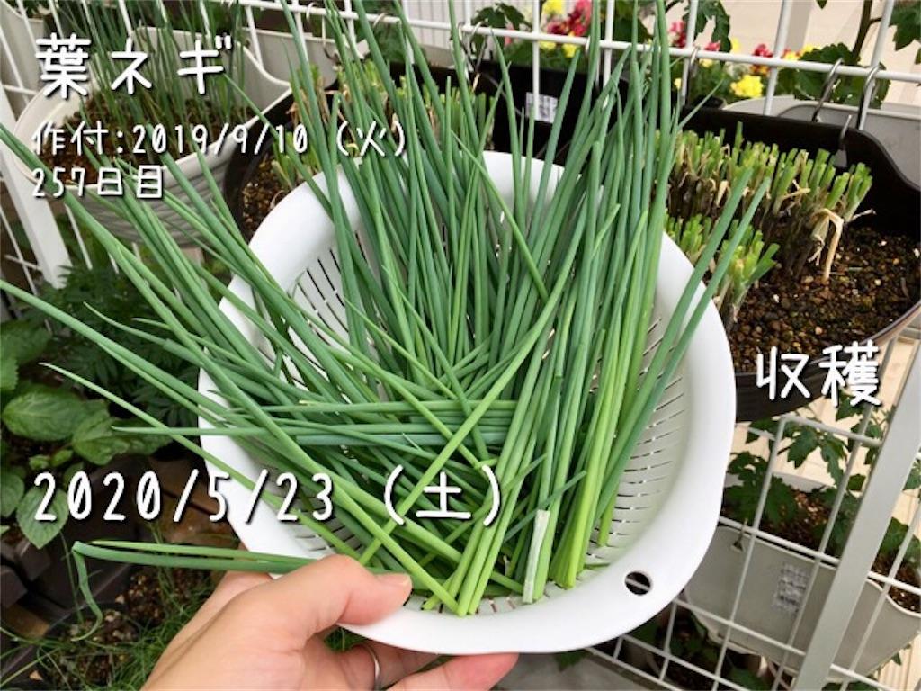 f:id:Mt_vegetable:20200523230121j:image