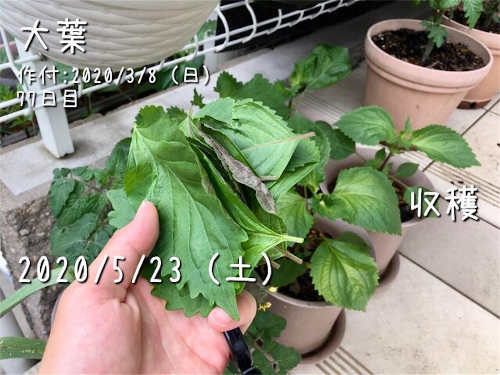 f:id:Mt_vegetable:20200523230203j:image