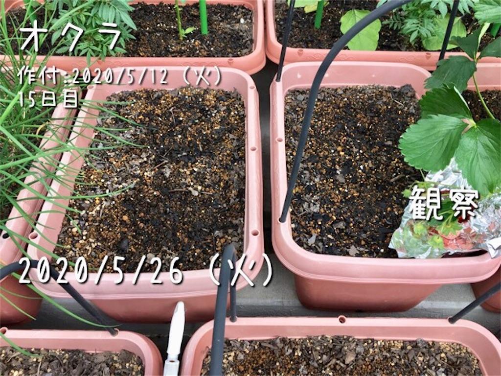 f:id:Mt_vegetable:20200526114244j:image