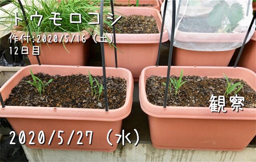 f:id:Mt_vegetable:20200527230533j:image