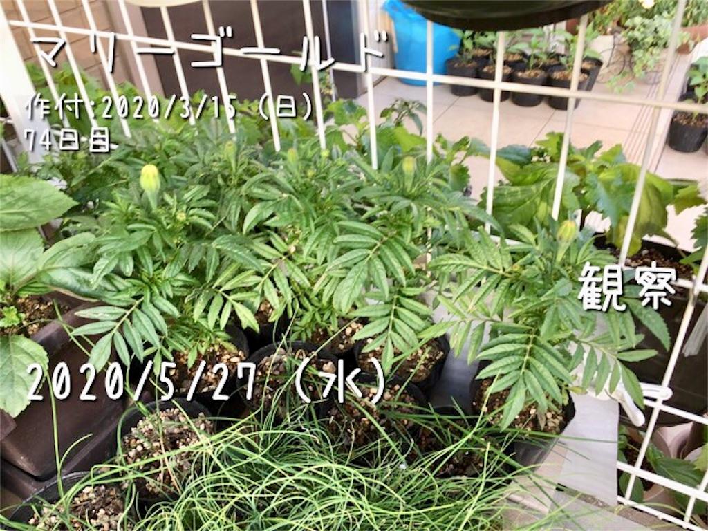 f:id:Mt_vegetable:20200527230721j:image