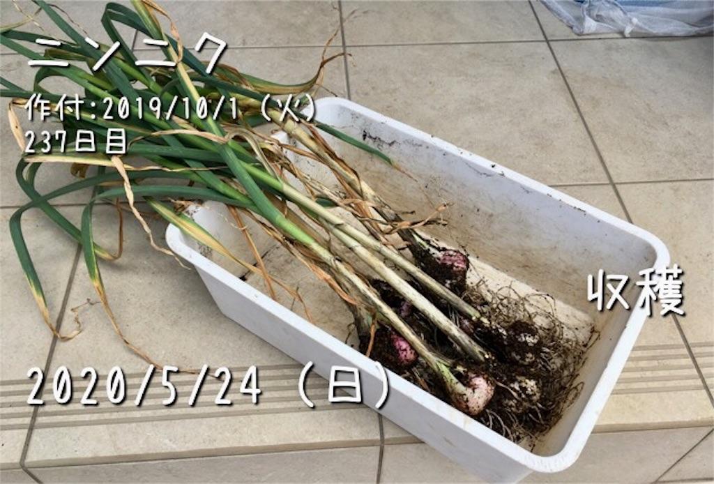 f:id:Mt_vegetable:20200528204520j:image